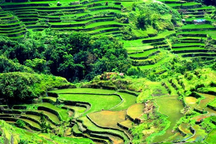 terraced rice plantation