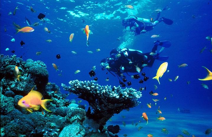 pulsating marine life underwater
