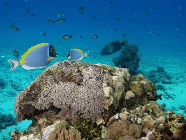 ideal diving spot for beginners