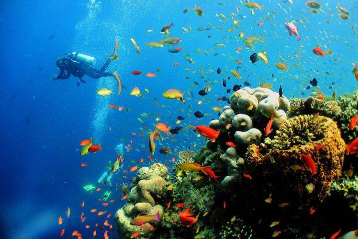 abundant marine life species