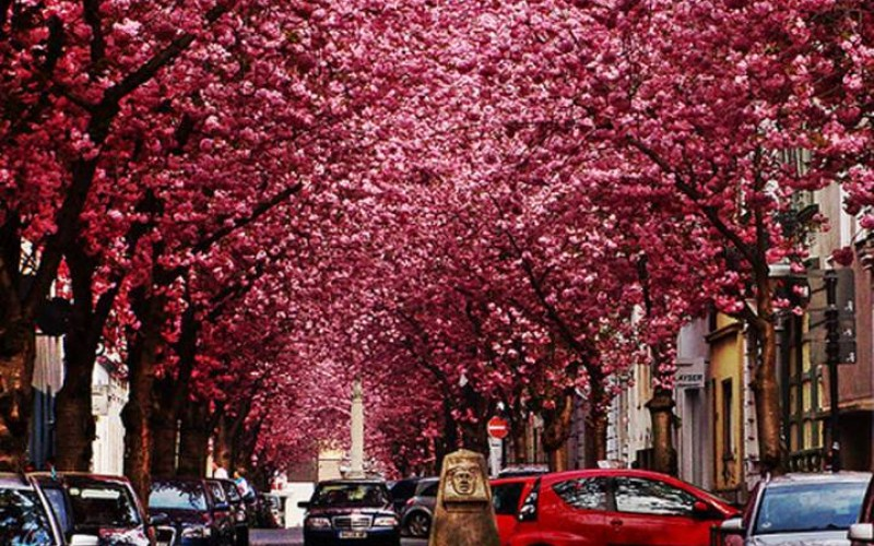 Top 15 Most Amazing Tree Tunnels In The World