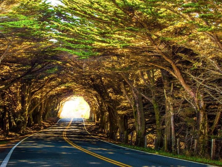 Natural Tree Tunnel